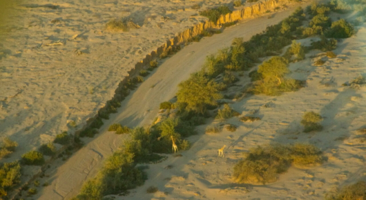 Giraffe sighting from the air – in the Hoanib river bed