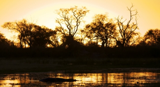 Botswana is no exception when it comes to the famed African sunsets. Here a hippo seen in a Delta pan at last light