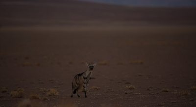 Namibia Expedition Sightings