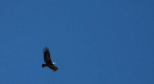 We saw condors most days
