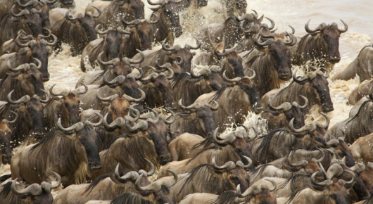 Few things compare to the power and energy of the Great Migration