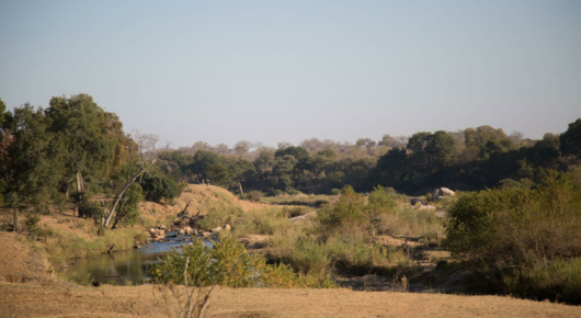 We found high densities of animals along the Sabie river