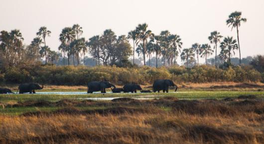 An elephant bull in the Hoanib river bed - Namibia