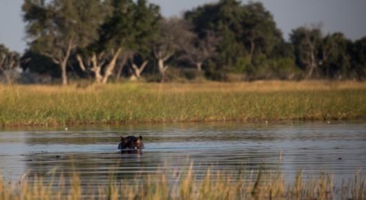 The architects of the Okavango