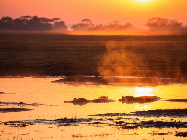 Hippos at Sunrise in Zambia