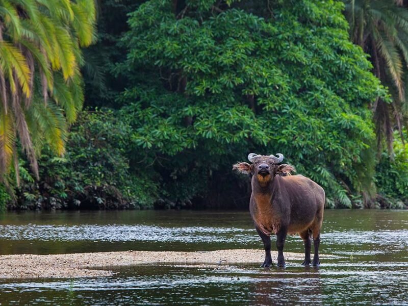 Odzala Discovery Camps - Fauna and Flora